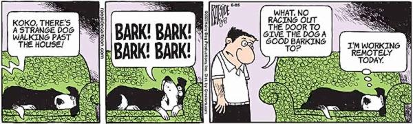 barking-9.jpg