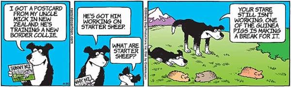 sheep-8.jpg