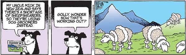 sheep-9.jpg
